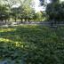 Борисовата градина